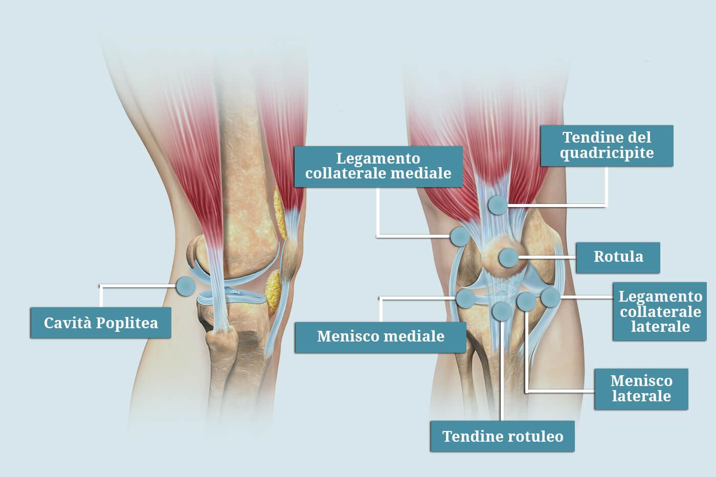 Tirato i muscoli nella parte posteriore del ginocchio e del polpaccio, conosciuta come...